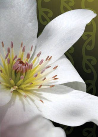 Mini Card Aperture Clematis