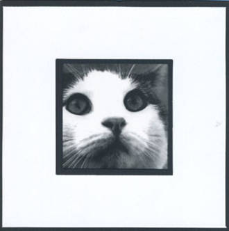 Blank Card: Cat Face