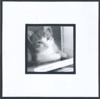 Blank Card: Kitten & Books