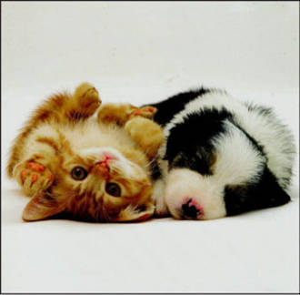 Blank Card: W11 Small - Kitten And Puppy