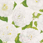 Lunch Napkins Caspari Camellias Ivory