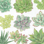 Lunch Napkins Caspari Succulents