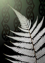 Mini Card Aperture Silver Fern