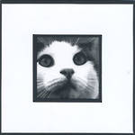 Blank Card Photographic Cat Face