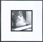 Blank Card Photographic Kitten & Books
