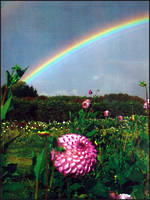 Mini Card: La Prairie Garden Rainbow