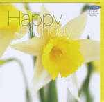 Female Birthday Card: Fab Flowers Welsh Daffodils