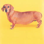 Hallmark Anthem Male Sausage Dog