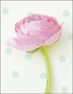 Mini Card: Pink Flower