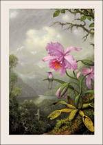 Martin Heade Pink Orchid