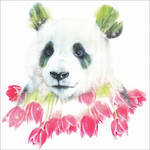 Wildlife Botanicals Panda