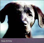 Birthday Card: W11 Small Puppy Love