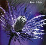 Female Birthday Card: W11 Thistle