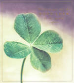 Good Luck Card Love Unlimited Clover