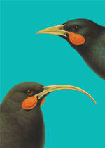 Pure NZ Reuben Price Huia Birds