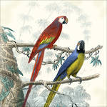 Lunch Napkins Paper Products Antique Parrots