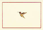 Note Cards Hummingbird