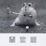 Blank Card: Nero - Hamster Playing Golf