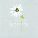 Sympathy Card Flora Pop Daisy