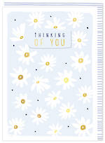 Sympathy Card Thinking of You Kirra White Daisies
