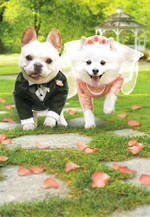 Wedding Card Avanti Dogs