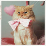 1000 Words Ginger Cat Pink Bow