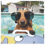 1000 Words: Cool Dog Sunglasses