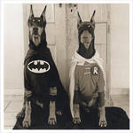 1000 Words: Batman Robin Dogs