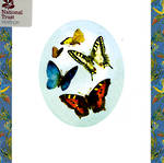 Blank Card: Nat Trust Square - Butterflies