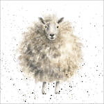 Wrendale Country Set Woolly Sheep