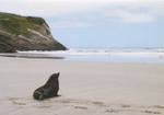 Pure NZ - Kiwiana: Fur Seal