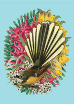 Pure NZ - Reuben Price: Colourful Fantail