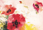 Note Cards Watercolour Poppies