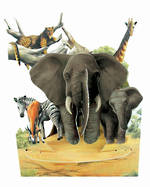 Santoro Swing Cards: Elephants
