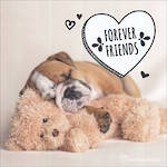 Adorable: Forever Friends