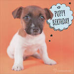 Adorable: Puppy Birthday