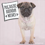 Adorable: Pugtastic Birthday Wishes